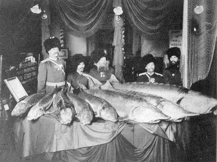 Уральские казаки с выловленной рыбой