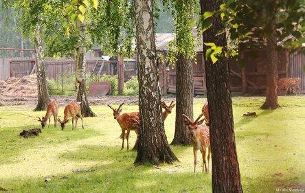 Оленья ферма около Иткуля